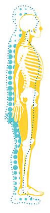 O esqueleto, um tecido vivo